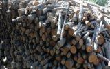 کشف ۱۲ تن چوب بلوط قاچاق در نجف آباد