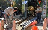 دفاع از درختان خشکیده در نجف آباد + تصاویر