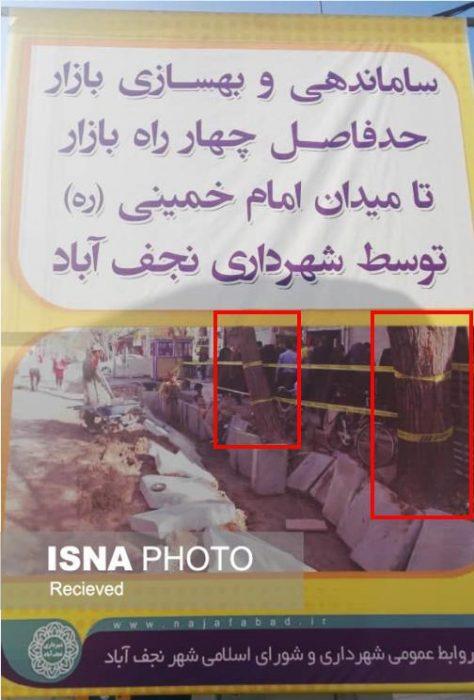 قطع درختان در نجف آباد