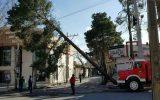 قطع درخت در اثر وزش باد شدید در نجف آباد و قطعی برق منطقه + ویدئو